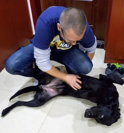 man bending over to pet black lab's belly