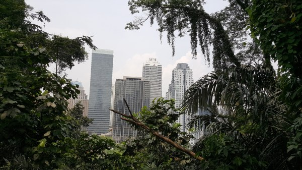A picture of some of the Kuala Lumpur City Center buildings shot from within the KL Forest Eco Park rain forest. The grey buildings are framed in with thick foliage.